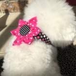 Hot Pink Dot Collar Flower for Dog Pet Collars