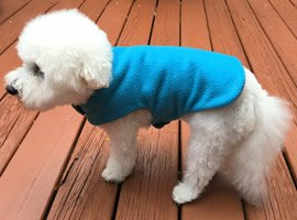 Do Dogs Need To Wear Coats?