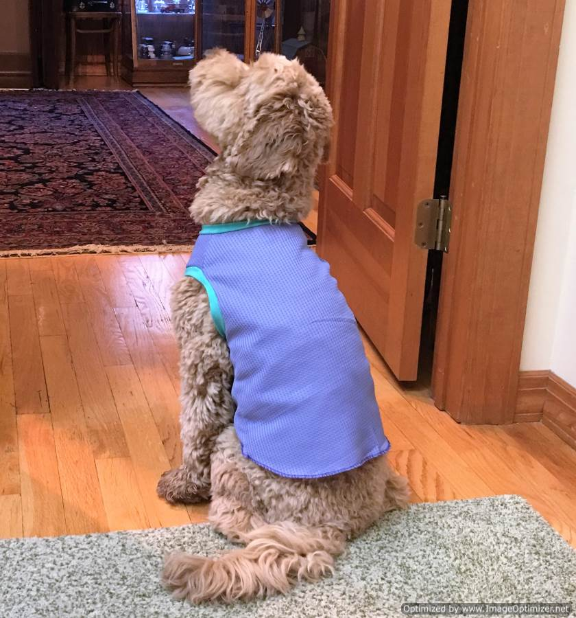 How Dog T-shirt Pullovers Make Your Dog Look Cool!