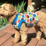 SASSY PAW Retro Velour Dog Pullover