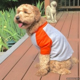SASSY PAW Orange and Heather Grey Ball Jersey Shirt for Dogs