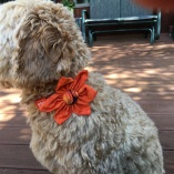Assorted Autumn Orange Collar Flower