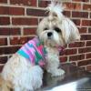 SASSY PAW Pink Camouflage Dog Shirt