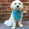 Personalized Dog Bandanna with Embroidered Dog Bone and Dog's Name