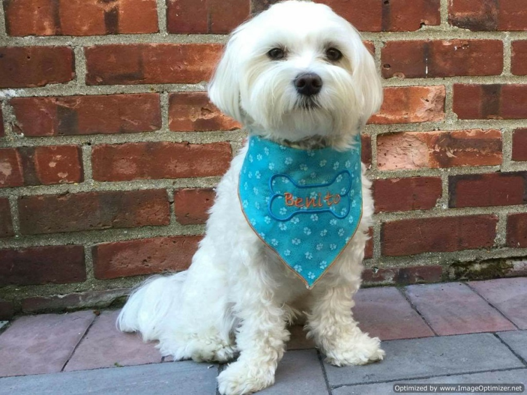 Personalized Dog Bandanna