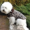 Cheetah Fur Coat for Dogs
