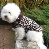Cheetah Fur Coat for Dogs