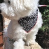 Custom Embroidered Cute Black and White Bones Dog Bandana with Personalized Dog Bone and Name