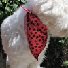 Custom Embroidered Cute Black and Red Paw Print Dog Bandana with Personalized Dog Bone and Name