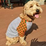SASSY PAW Orange Dot Shirt for Sassy Dogs