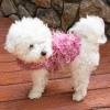 Queen Pink Fur Dog Coat with Rhinestone Queen Crowns for Bling on Collar