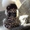 Custom Luxurious Animal Print Bone Fur Dog Coat with Pet's Name in All Sizes