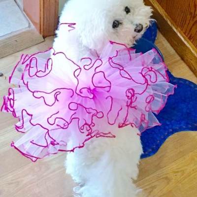 Tipped Pink Tutu Skirt for Dogs and Cats
