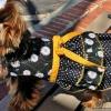 Bella & Friends The Daisy Mae Dog Dress