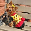 Lady Bug Ruffled Dog Harness