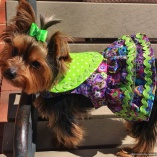 Purple Lime Ruffled Harness for Dogs