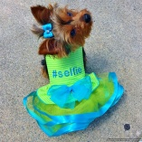Bella & Friends #Selfie Lime Party Dog Dress for Luxury Pets and Showoffs