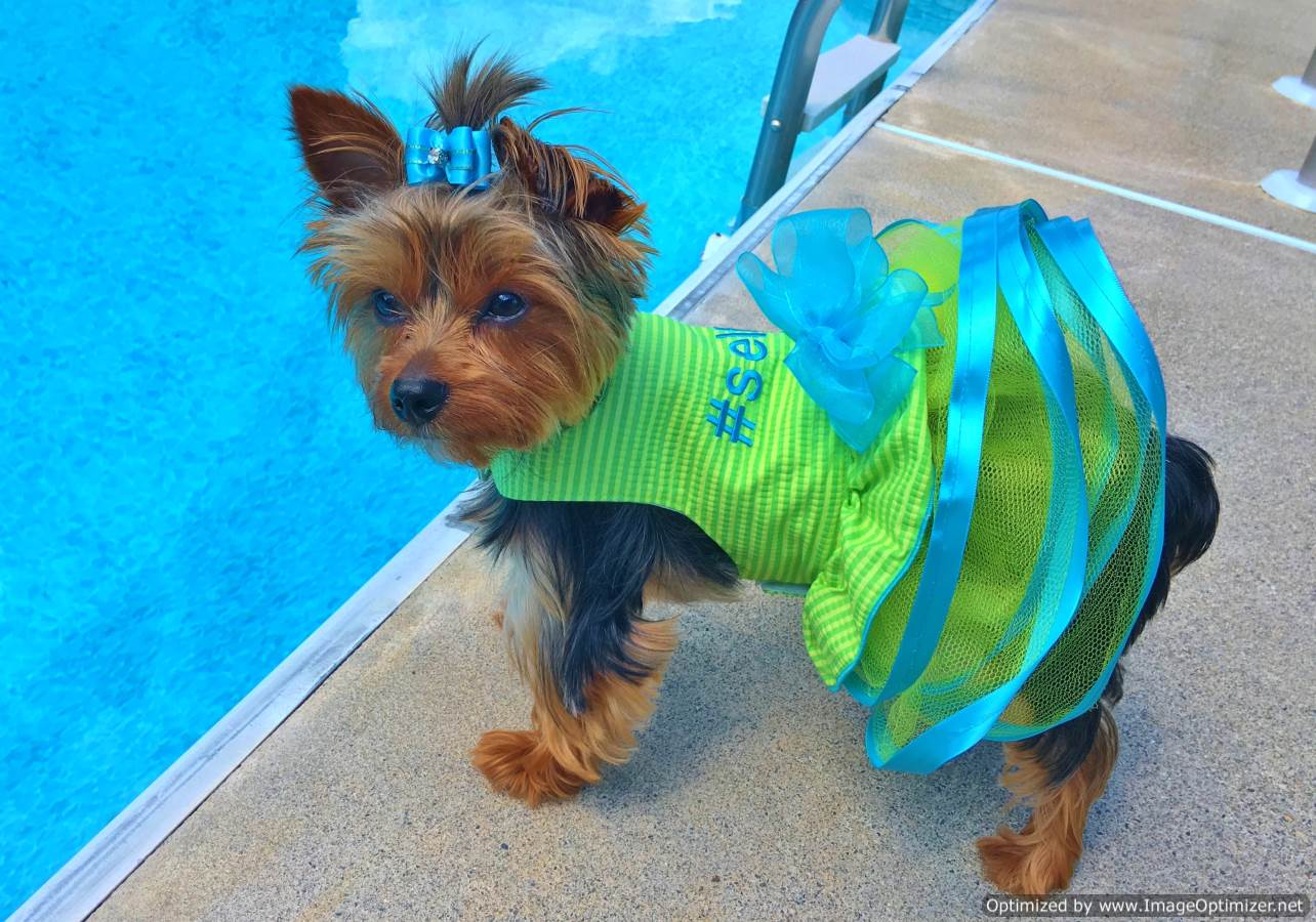 Buy Custom Dog Clothes & Pet Garments in America | Sassy Dog Fashions