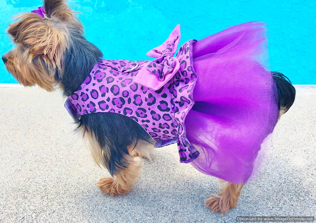 Buy Purple Diva Tutu Dress From Our Dog Couture Collection
