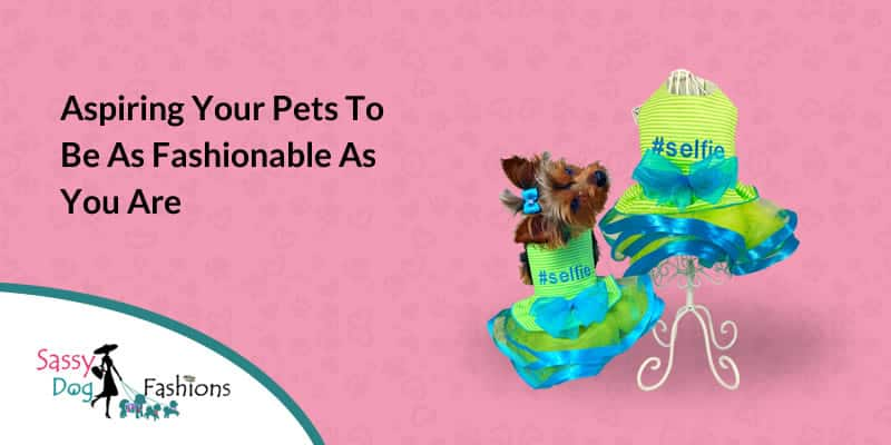 Aspiring your Pets To Be As Fashionable As You Are