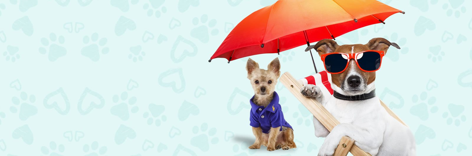 Sassy Dog Fashions - Best online store for pet clothing and accessories
