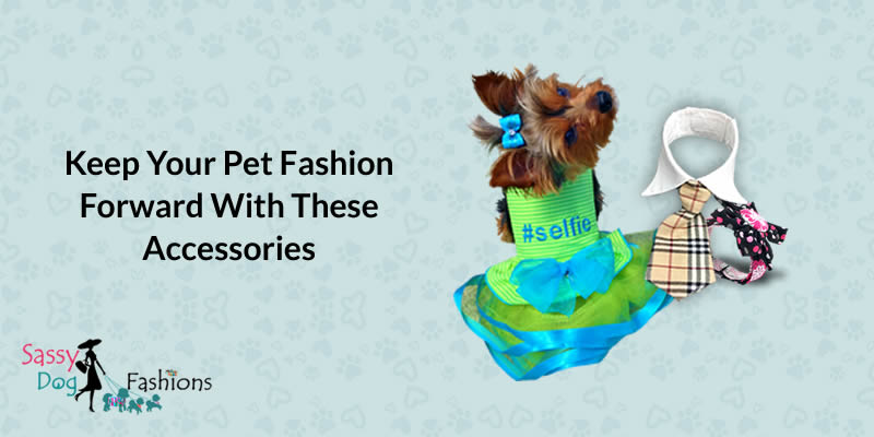 Keep Your Pet Fashion Forward with these Accessories