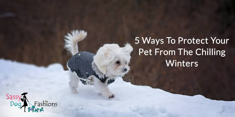 5 Ways To Protect Your Pet From The Chilling Winters!