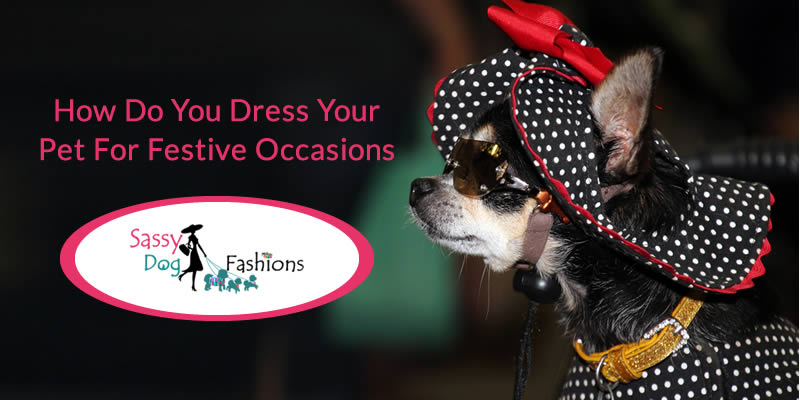 How Do You Dress Your Pet For Festive Occasions?