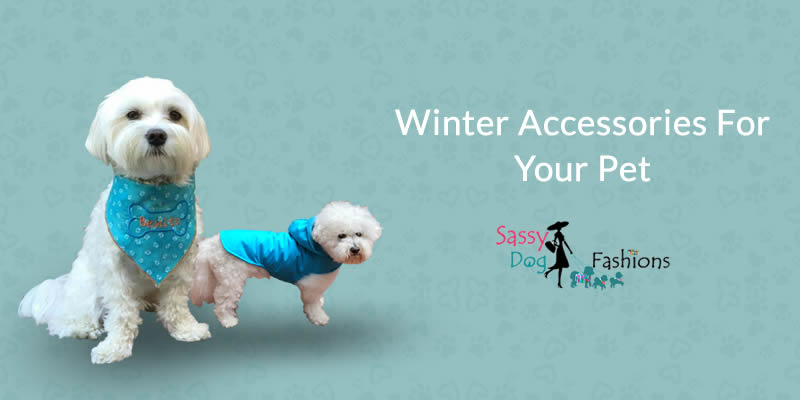 Winter Accessories For Your Pet!