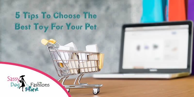 5 Tips To Choose The Best Toy For Your Pet!