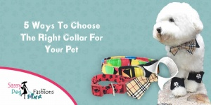 5 ways to choose the right collar for your pet!