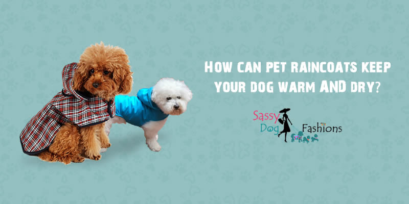 How can pet raincoats keep your dog warm AND dry?