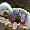 Sassy Dog Sleeper Dog Pajama Onesie Jumper in Dog Park theme