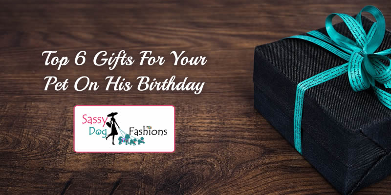 Top 6 gifts for your pet on his birthday!