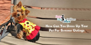 How can you dress up your pet for summer outings