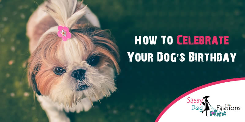 How to celebrate your dog's birthday!