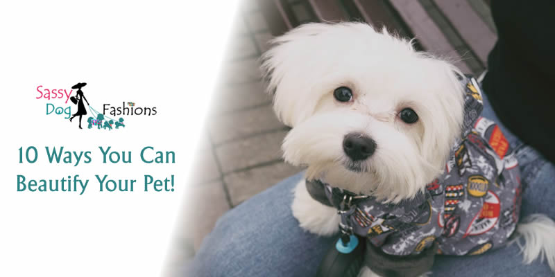 10 Ways You Can Beautify Your Pet!