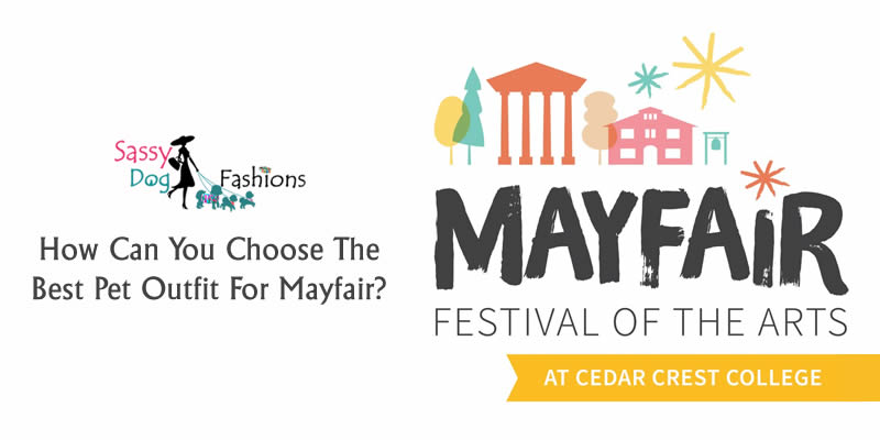 How Can You Choose The Best Pet Outfit For Mayfair?
