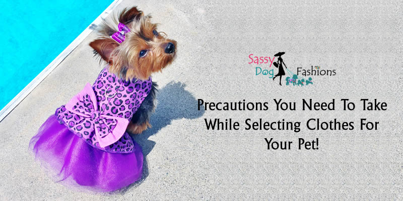 Precautions You Need To Take While Selecting Clothes For Your Pet!