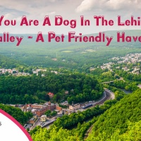If you are a Dog in the Lehigh Valley - a Pet Friendly Haven