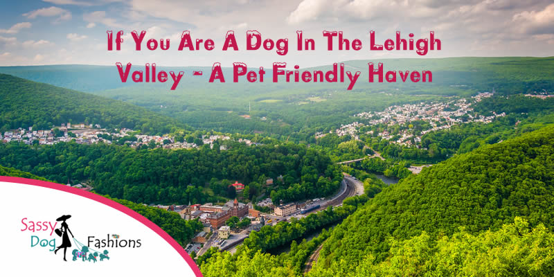 If You Are A Dog In The Lehigh Valley – A Pet Friendly Haven