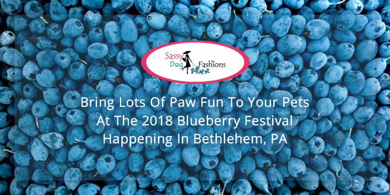 Bring Lots of Paw Fun to Your Pets at the 2018 Blueberry Festival happening in Bethlehem, PA