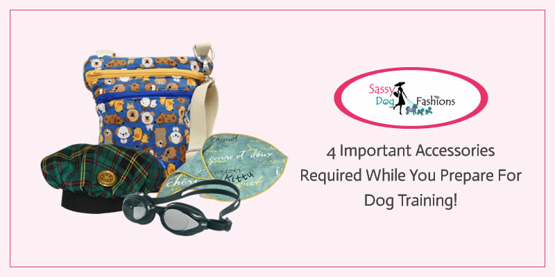 4 Important Accessories Required While You Prepare For Dog Training!