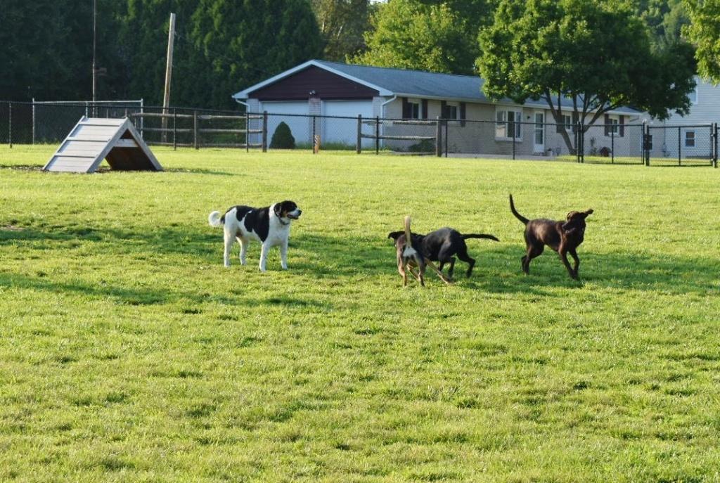 Allen Township Dog Park