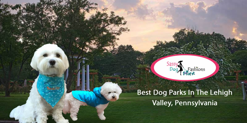 Best Dog Parks In The Lehigh Valley, Pennsylvania