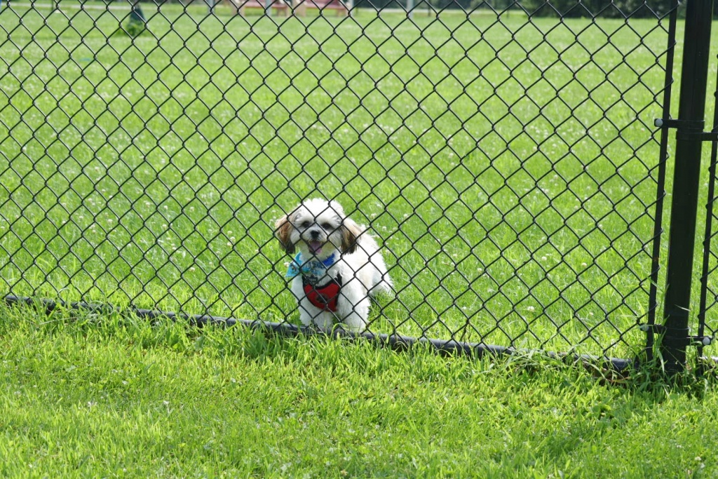 Lower Macungie Dog Park