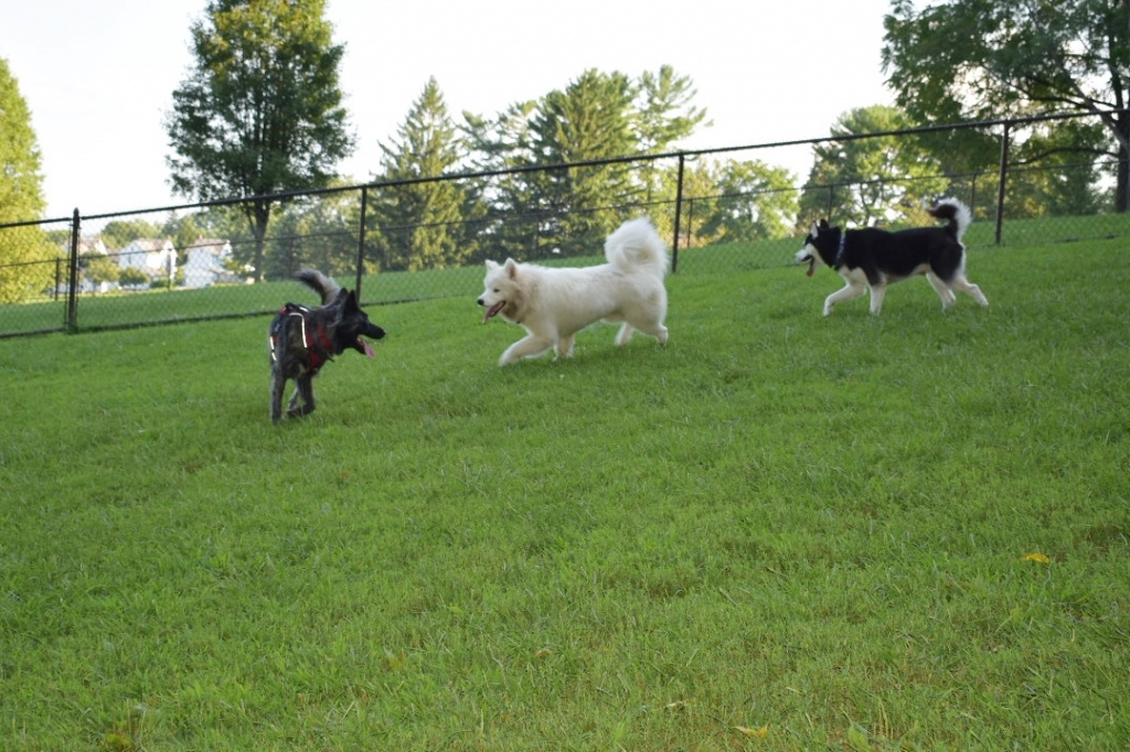 Nazareth Dog Park