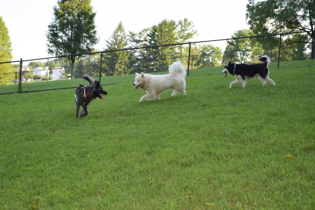 Nazareth Dog Park