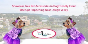 Showcase Your Pet Accessories in DogFriendly Events Meetups Happening Near Lehigh Valley.