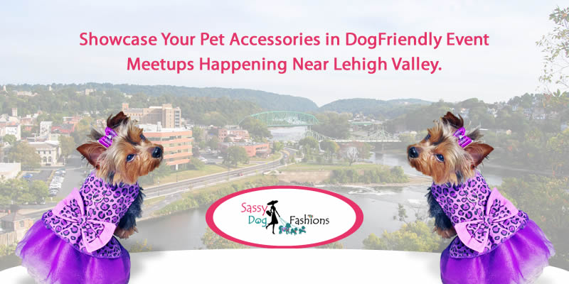 Showcase Your Pet Accessories in DogFriendly Event Meetups Happening Near Lehigh Valley